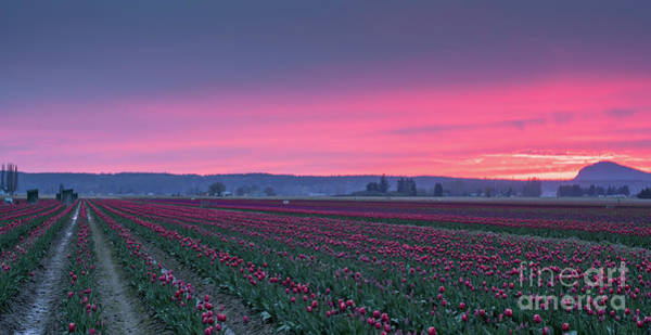 Wall Art - Photograph - Skagit Valley Farmland Sunset by Mike Reid