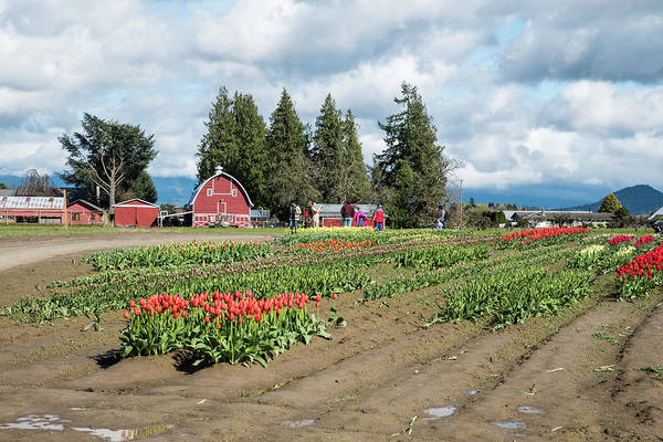 Photograph - Skagit Valley Shades Of Red by Tom Cochran