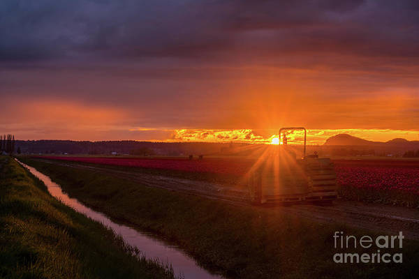 Wall Art - Photograph - Skagit Valley Tractor Sunset Sunstar by Mike Reid