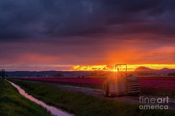 Wall Art - Photograph - Skagit Valley Tractor Sunstar by Mike Reid