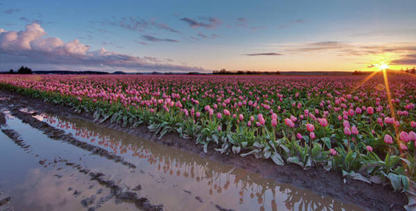 Mount Vernon Photograph - Skagit Valley Tulip Reflections by Mike Reid