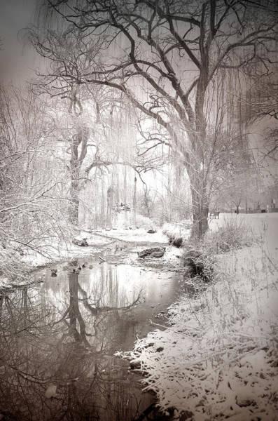 Photograph - Skaha Park In Winter by Tara Turner