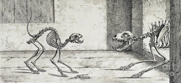 Photograph - Skeletal System, Cat And Dog by Wellcome Images