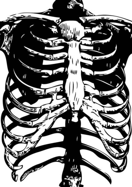 Lung Digital Art - Skeleton Ribs by Eclectic at HeART