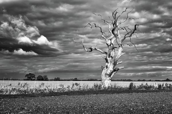 Photograph - Skeleton Tree by James Billings