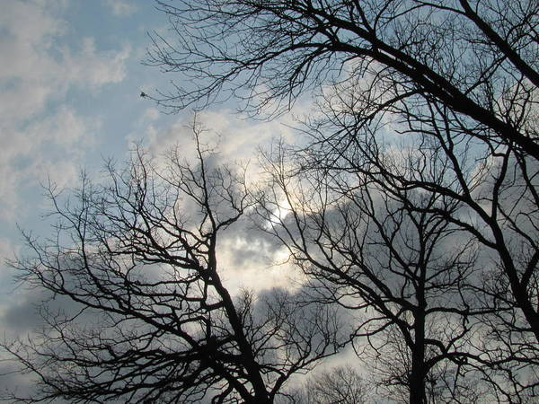 Photograph - Skeleton Trees 1 by Anita Burgermeister