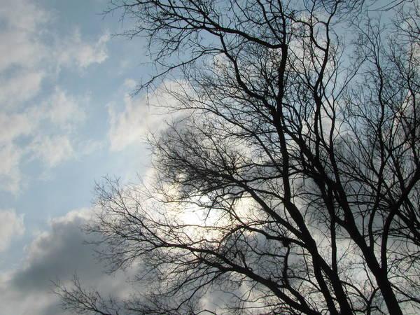 Photograph - Skeleton Trees 2 by Anita Burgermeister
