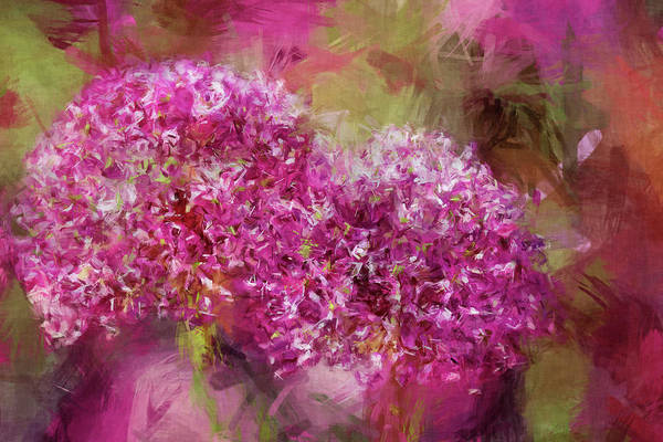 Wall Art - Photograph - Sketchy Paint Allium  by Geraldine Scull