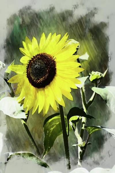 Photograph - Sketchy Sunflower 2 by Marty Koch