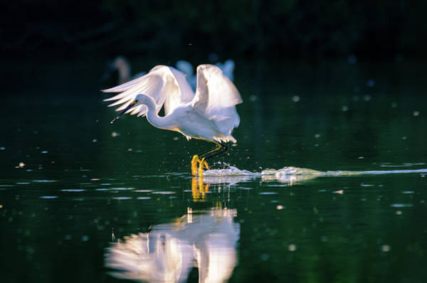 Photograph - Skimming by Emily Bristor