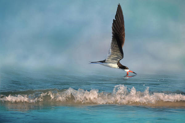 Skimmers Photograph - Skimming Off The Top 2 by Donna Kennedy