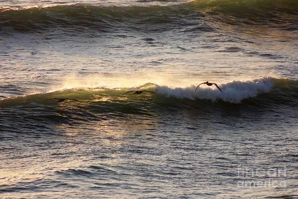 Wall Art - Photograph - Skimming Over The Ocean by Mesa Teresita