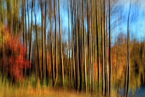 Photograph - Skinny Forest Swipe by Don Johnson