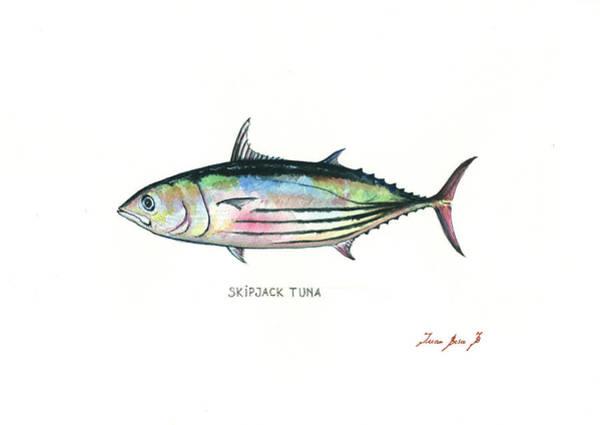 Skipjack Wall Art - Painting - Skipjack Tuna by Juan Bosco