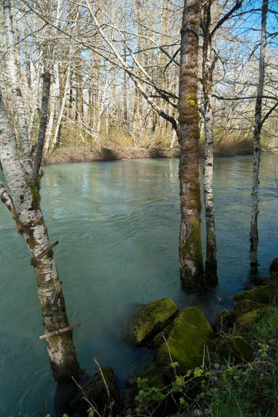 Photograph - Skokomish River - Swollen River 3 by Jani Freimann