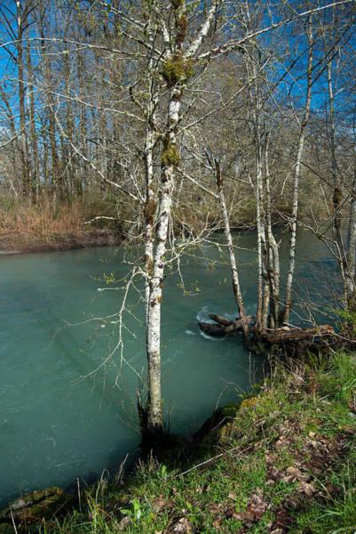 Photograph - Skokomish River - Swollen River 4 by Jani Freimann