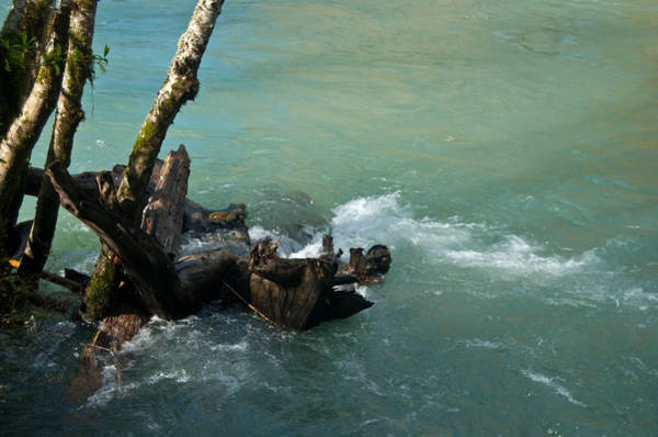 Photograph - Skokomish River - Swollen River by Jani Freimann