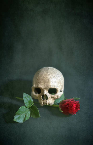 Wall Art - Photograph - Skull And Red Rose by Svetlana Sewell