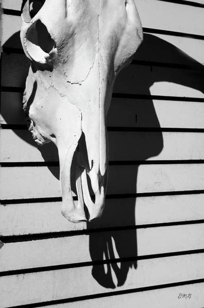Photograph - Skull And Shadow by David Gordon