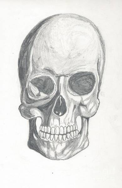 Drawing - Skull Study 2 by Reed Novotny