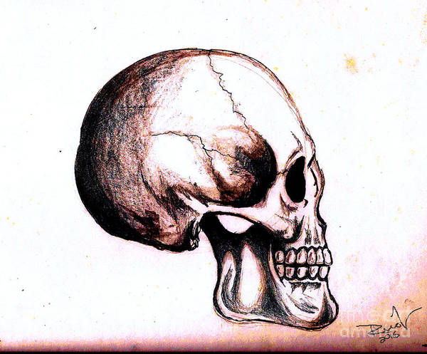 Drawing - Skull Study 4 by Reed Novotny