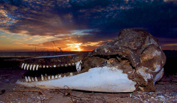 Photograph - Skull Sunset by Britt Runyon