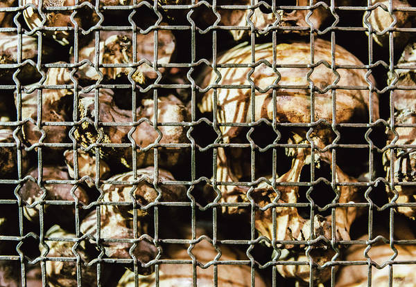 Photograph - Skulls And Bones by Alexandre Rotenberg
