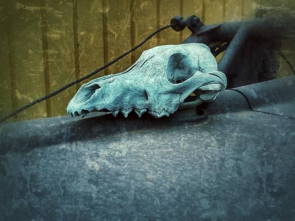 Photograph - Animal Skull by Tony Baca