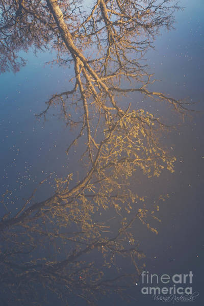 Photograph - Sky Above Me, Water Below Me, Life Surrounds Me. by Viviana Nadowski