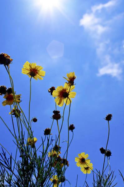 Photograph - Sky Flowers by Adam Reinhart
