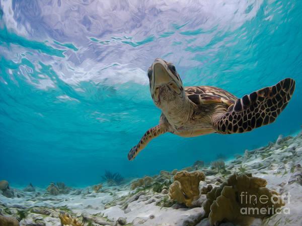 Alejandro Gutierrez Wall Art - Photograph - Sky Glider Turtle by Athoyo