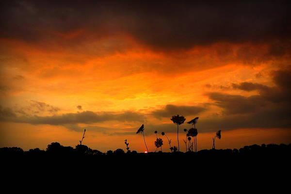 Photograph - Sky On Fire by Viviana  Nadowski