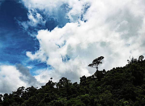 Photograph - Lone Tree by Walt Sterneman