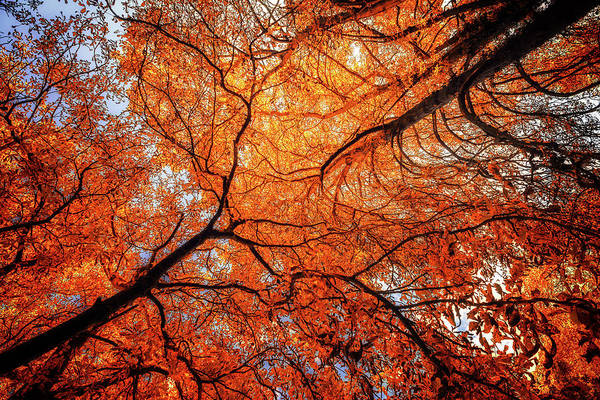 Photograph - Sky Roots In Forest Red by John Williams