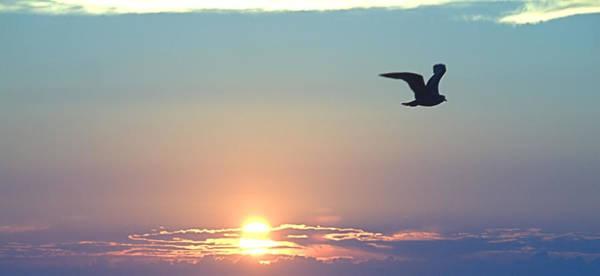 Photograph - Sky View Sunrise by  Newwwman