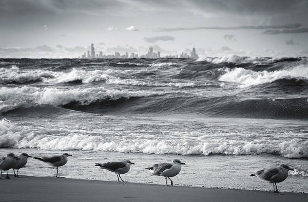 Wall Art - Photograph - Skyline And Seagulls by Jackie Novak
