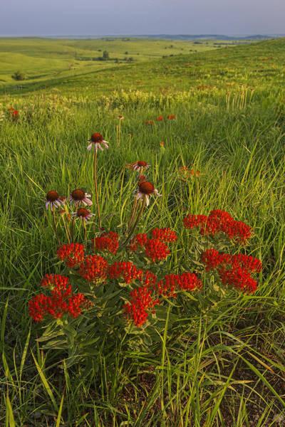 Photograph - Skyline Bouquet by Scott Bean