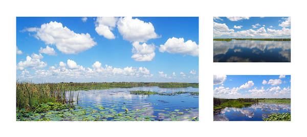 Photograph - Skyscape Reflections Blue Cypress Marsh Collage 2 by Ricardos Creations