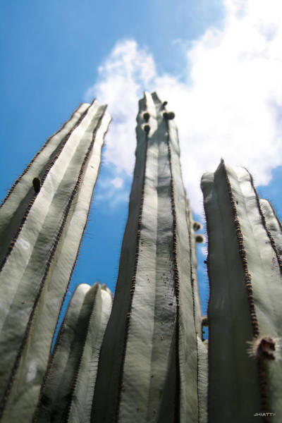 Digital Art - Skyscraper Cacti by Jhiatt