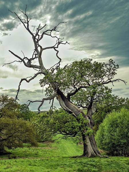 Photograph - Skyward by Nick Bywater