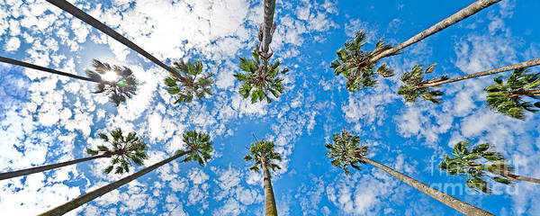 Skyward Palms Art Print by Az Jackson