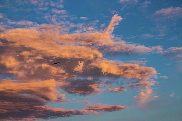 Photograph - Skyward by Richard Goldman