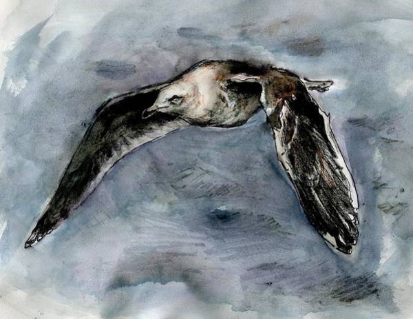Slaty-backed Gull Art Print