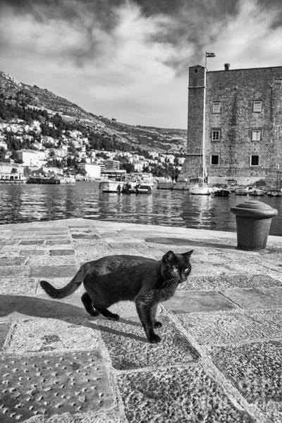 Stari Grad Photograph - Sleek In Stari Grad by Becqi Sherman
