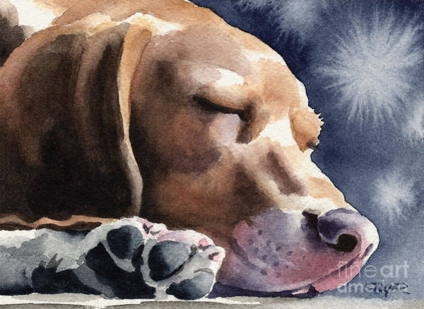 Beagle Painting - Sleeping Beagle by David Rogers