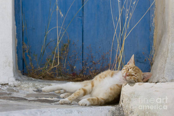 Laying Out Photograph - Sleeping Cat, Greece by Jean-Louis Klein & Marie-Luce Hubert