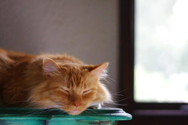 Wall Art - Photograph - Sleeping Cat by Heath Adams