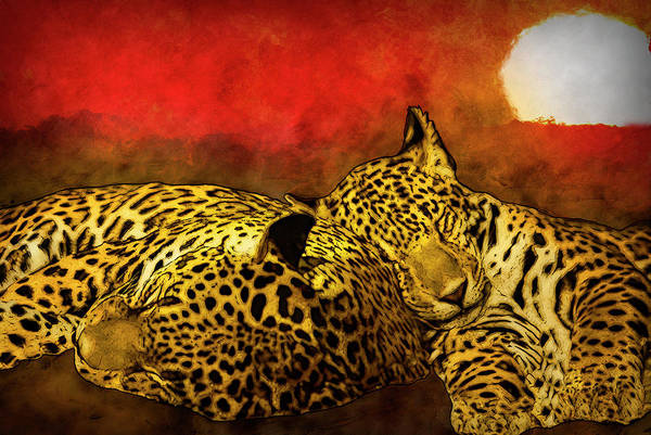 Desert Mixed Media - Sleeping Cats by Jack Zulli