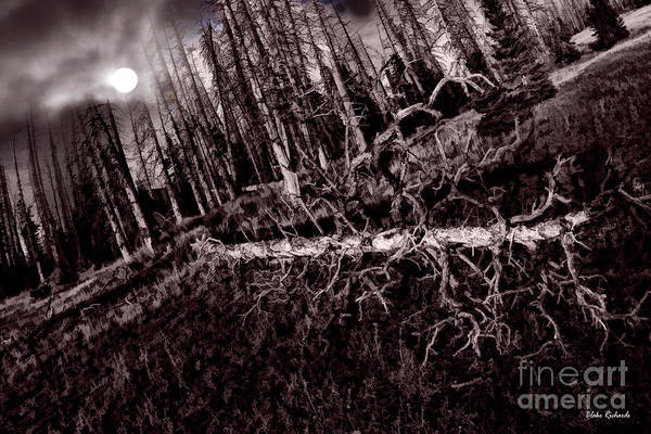 Photograph - Sleeping Forest Black White by Blake Richards