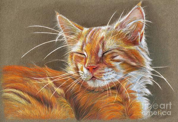 Kitten Drawing - Sleeping Ginger Kitten Cc12-005 by Svetlana Ledneva-Schukina